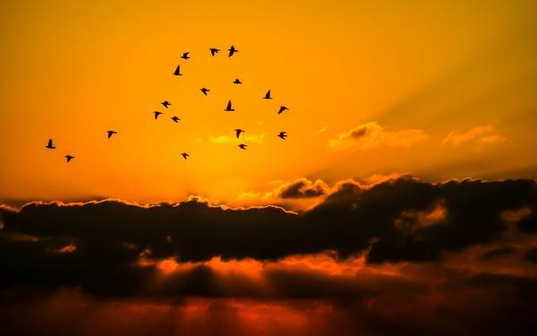 siatka na ptaki tkana