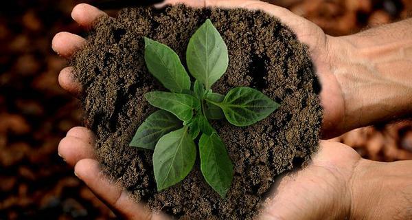 stymulator wzrostu roślin